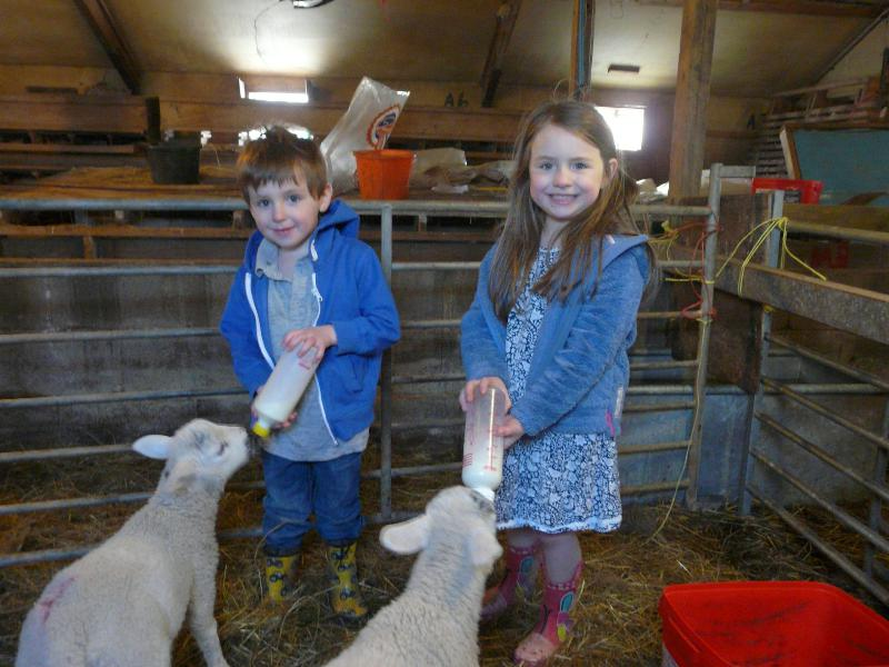 springbank lamb feeding 2016_resized